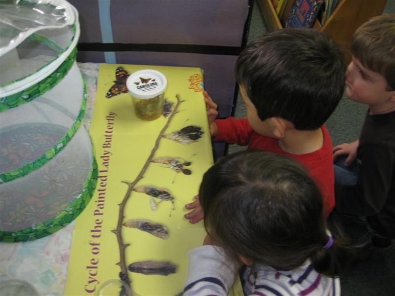 butterfly-preschool