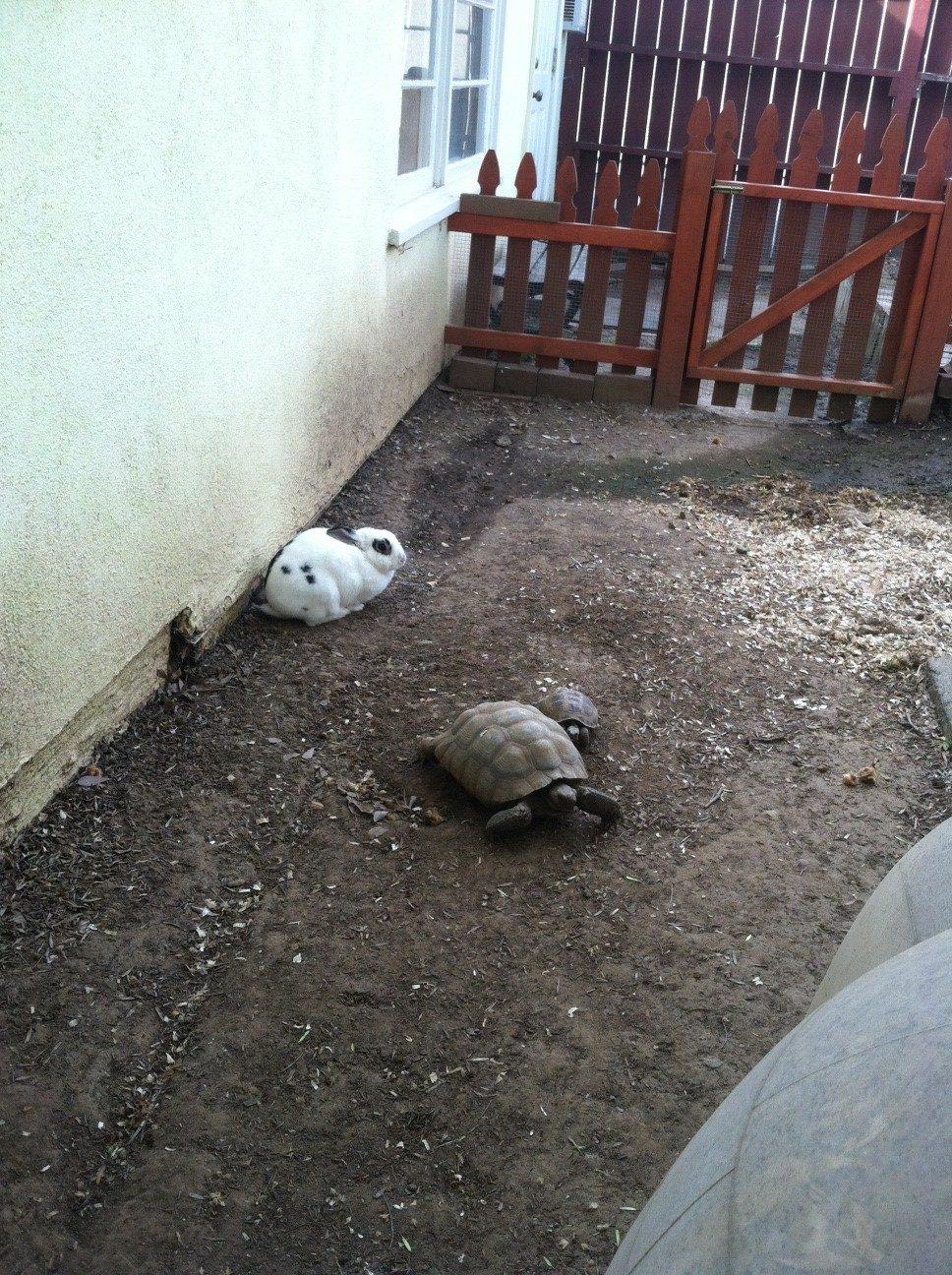 preschool live animals