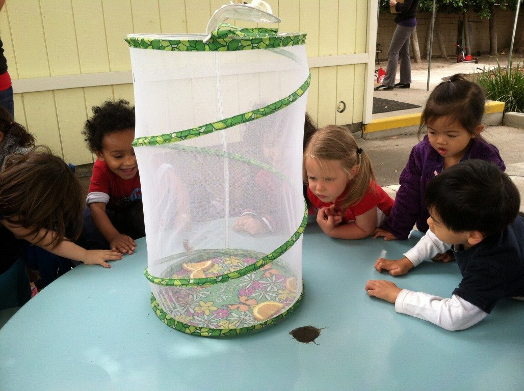 preschool butterfly release  (5)