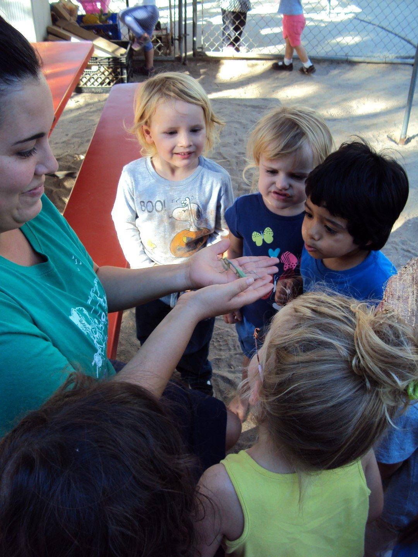 preschool bugs (2)