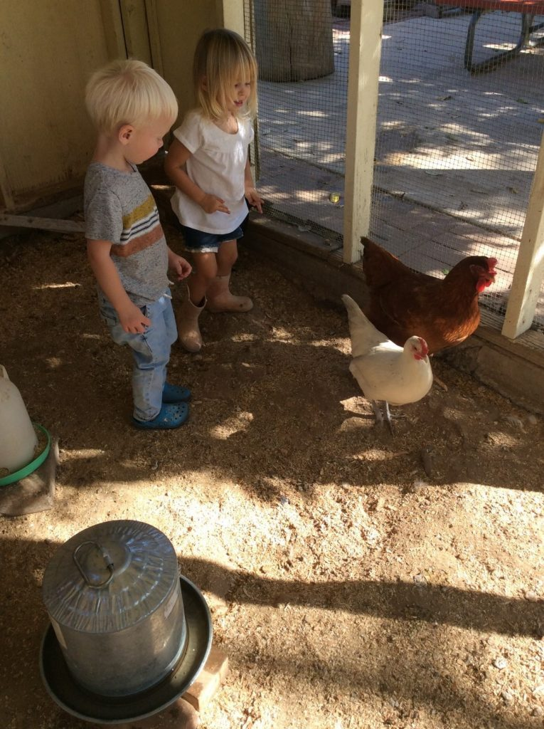 orange preschool and live animal care