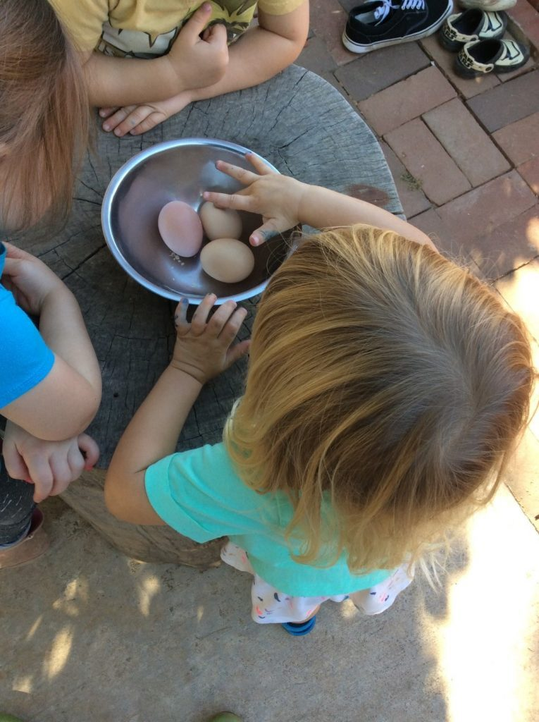 preschool day care child learning numbers counting eggs
