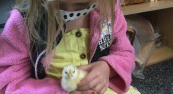preschool animal